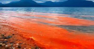 ¡Peligro! Las algas tóxicas podrían regresar a Florida